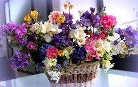 cvety_korzinka_buket_raznye_krasivye_ranunkulyus_frezii_giacinty_2000x1260