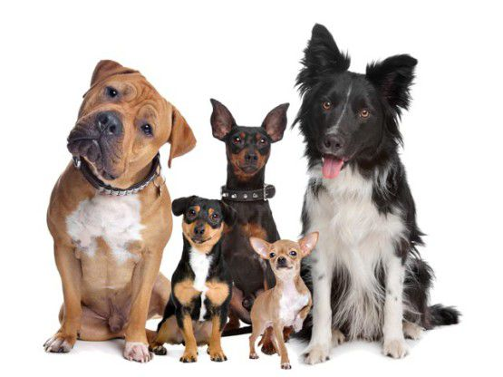 Собаки всех пород