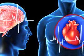 Brain-and-heart
